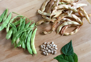 Garden To Table - Beans